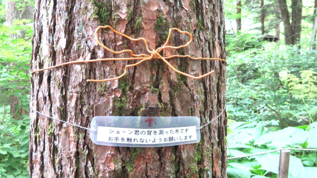 ショーン君の背を測った木